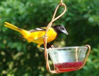 Songbird Essentials Single Jelly Cup Oriole Bird Feeder