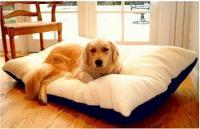 Majestic Pet Rectangle Pet Bed - Medium/Khaki