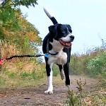 Doggerjogger Bike Dog Leash - Black