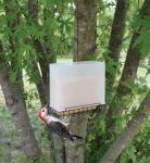 Songbird Essentials Suet Feeder Saver Feeder Large Bird Feeder