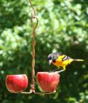 Songbird Essentials Double Fruit Bird Feeder